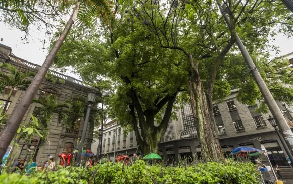 En Medellín, 595 árboles tienen valor patrimonial